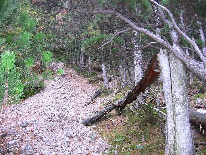 Foto: Andreas Koller / Klettersteigtour / Auf dem Naturfreundesteig durch die Kleine Klause (1002m) / Viel Schutt in der Krummen Ries / 17.10.2010 17:44:48