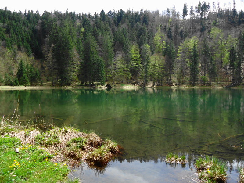 Foto: Günter Siegl / Wandertour / Filbling 1307m über Nordwestrücken / Filblingsee / 07.05.2015 11:35:04