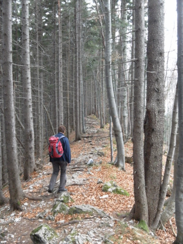 Foto: Wolfgang Lauschensky / Wandertour / Filbling 1307m über Nordwestrücken / Abstieg am Nordwestrücken / 11.11.2010 21:30:12