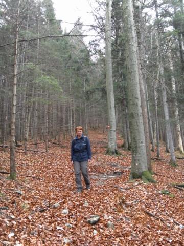 Foto: Wolfgang Lauschensky / Wandertour / Filbling 1307m über Nordwestrücken / Wald über der Schottergrube / 11.11.2010 21:29:49