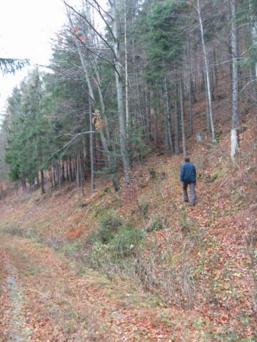 Foto: Wolfgang Lauschensky / Wandertour / Filbling 1307m: Runde über Westhang und NW-Rücken / schwach erkennbarer Einstieg in den Westhang über dem querenden Forstweg / 16.11.2010 11:11:02