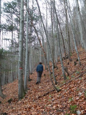 Foto: Wolfgang Lauschensky / Wandertour / Filbling 1307m: Runde über Westhang und NW-Rücken / herbstliche Überdeckung der Pfadspuren / 16.11.2010 11:10:50