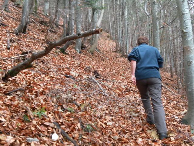 Foto: Wolfgang Lauschensky / Wandertour / Filbling 1307m: Runde über Westhang und NW-Rücken / am Beginn der unangenehmen Querung des steilen Westhangs / 16.11.2010 11:10:30