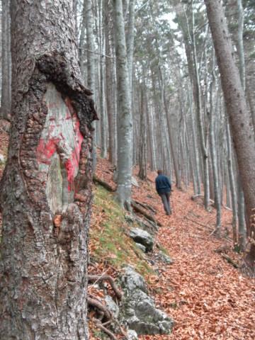 Foto: Wolfgang Lauschensky / Wandertour / Filbling 1307m: Runde über Westhang und NW-Rücken / in Rückennähe wird der Pfad etwas breiter / 16.11.2010 11:08:30