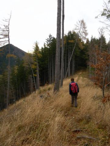 Foto: Wolfgang Lauschensky / Wandertour / Filbling 1307m: Runde über Westhang und NW-Rücken / kurze baumfreie grasige Unterbrechung am bewaldeten NW-Rücken / 16.11.2010 11:07:20