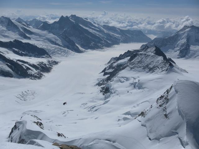 Foto: Wolfgang Lauschensky / Skitour / Hinter Fiescherhorn  4025m Überschreitung / Blick vom Jungfraugipfel über den Jungfraufirn zum Konkordiaplatz / 30.04.2011 21:01:38