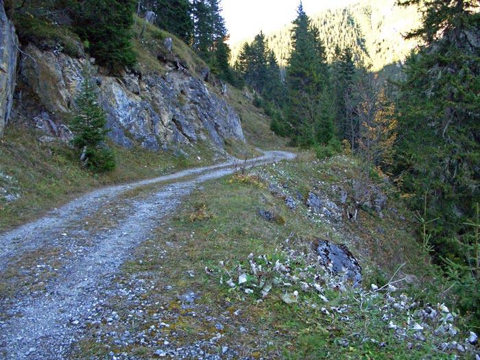Foto: vince 51 / Wander Tour / durchs Rotlechtal auf den Loreakopf / Die ersten 3 Km verlaufen auf diesem Forstweg / 08.06.2011 23:08:38
