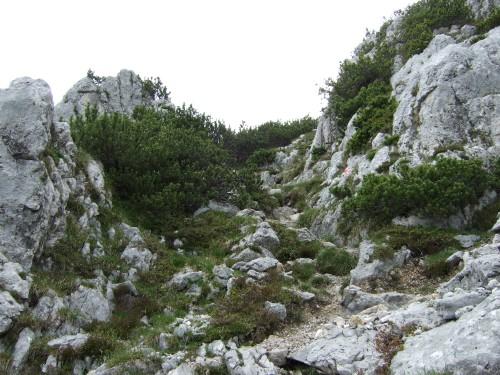 Foto: hofchri / Wandertour / Hochstaufen (1771 m) über Steinerne Jäger (I+) / Steigspuren sind immer gut sichtbar / 09.06.2011 21:42:45