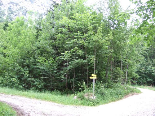 Foto: hofchri / Wandertour / Hochstaufen (1771 m) über Steinerne Jäger (I+) / zum Goldtropfsteig nach dem Wegweiser am rechten Weg links / 09.06.2011 21:32:25