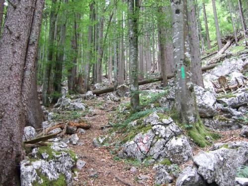Foto: hofchri / Wandertour / Hochstaufen (1771 m) über Steinerne Jäger (I+) / grüne Striche im Überfluss prägen den Wegverlauf / 09.06.2011 21:38:57