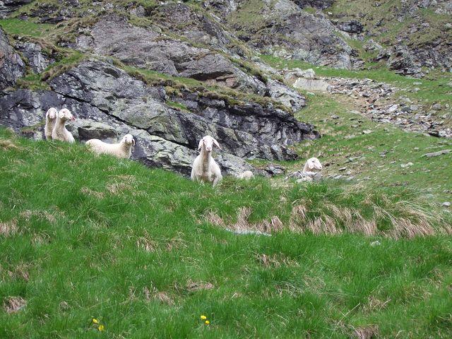 Foto: Datzi / Wandertour / Rundtour über die Wasserfallspitze (Biwak) Aufstieg Herzmaierkar - Abstieg Wildkar / Man wird auch bei einer einsamen Tour beobachtet / 18.06.2011 16:08:12
