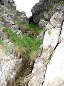 Foto: Datzi / Wandertour / Überschreitung Kieseck - Waldhorn (Biwak) über die Sonntagskarseen und Klafferkessel / Der Grasbewachsene und teilweise feuchte Kamin bei Einstieg zum Grat / 26.06.2011 11:14:23