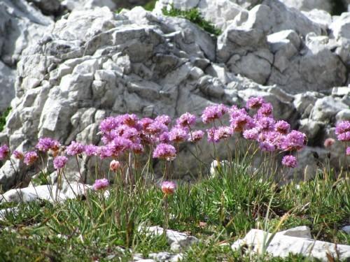 """Foto: hofchri / Klettersteigtour / Brenta-Durchquerung  via """"Sent. Alfredo Benini"""" (Bocchette Weg – I. Etappe, 2905 m) / 19.08.2011 14:16:22"""