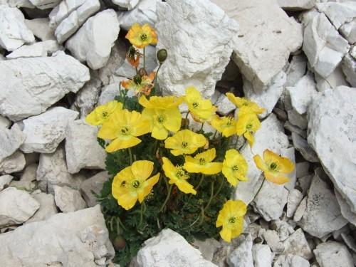 """Foto: hofchri / Klettersteigtour / Brenta-Durchquerung  via """"Sent. Alfredo Benini"""" (Bocchette Weg – I. Etappe, 2905 m) / 19.08.2011 14:18:06"""