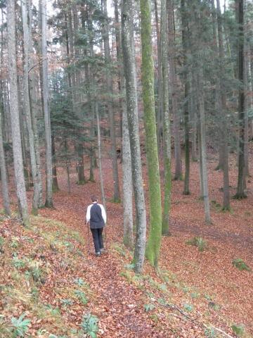 Foto: Wolfgang Lauschensky / Wandertour / Strumberg Überschreitung / herbstliche Waldwanderung / 06.12.2011 18:18:49