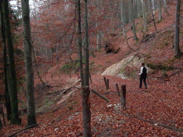 Foto: Wolfgang Lauschensky / Wandertour / Strumberg Überschreitung / südostseitiger Abstieg über den Karrenweg / 06.12.2011 18:17:33