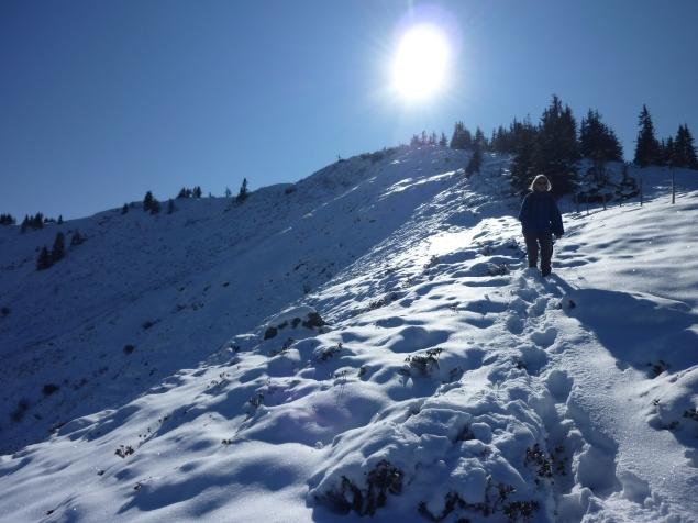 Foto: Manfred Karl / Wandertour / Gaisberg vom Wildpark Aurach / 04.11.2015 19:34:46