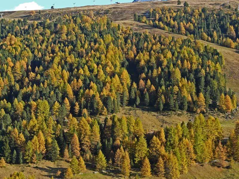 Foto: vince 51 / Wandertour / Von Rojen auf den Zehnerkopf / Herbstlicher Wald / 13.04.2012 22:10:09