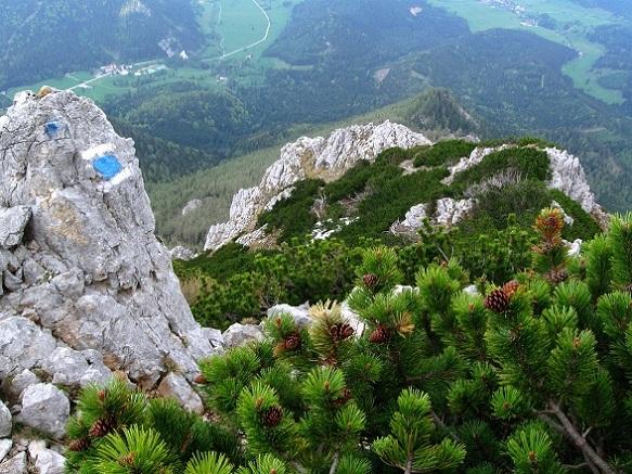 Foto: Andreas Koller / Klettertour / Nandlgrat auf das Schneebergplateau (1974m) / 21.05.2012 23:20:09