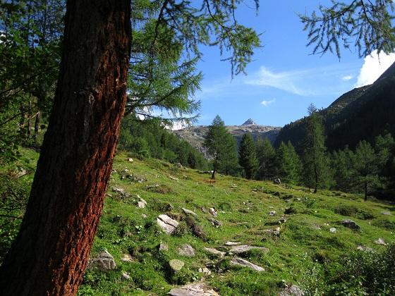 Foto: Andreas Koller / Wandertour / Goldbergspitze aus dem Großen Zirknitztal (3073m) / 22.09.2012 01:52:28