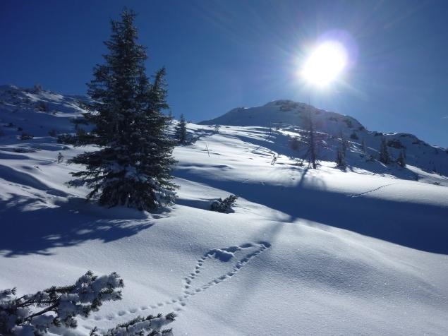 Foto: Manfred Karl / Skitour / Hinteres Labeneck, 1986 m / Letzter Hang zum Labeneck / 15.02.2013 21:16:18