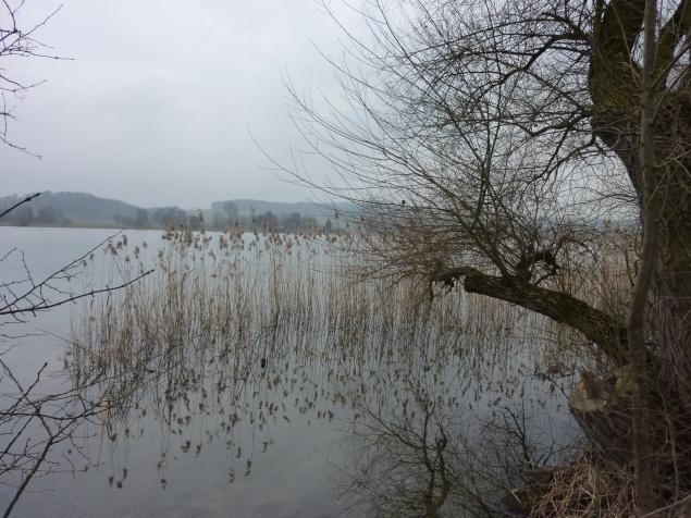 Foto: Manfred Karl / Wandertour / Tachinger See Ostuferweg / Tachinger See / 11.04.2013 21:34:22