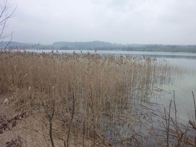Foto: Manfred Karl / Wandertour / Tachinger See Ostuferweg / 11.04.2013 21:32:34