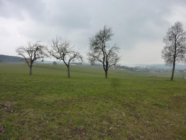 Foto: Manfred Karl / Wandertour / Tachinger See Ostuferweg / 11.04.2013 21:29:20