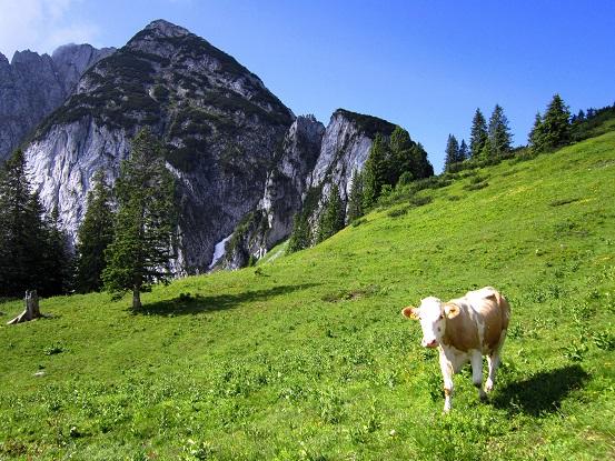 Foto: Andreas Koller / Klettersteigtour / Intersport Klettersteig Donnerkogel (2054m) / Zwieselalm / 12.07.2013 16:44:02