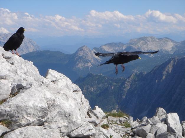 Foto: Manfred Karl / Wandertour / Hohes Brett über Brettgabel / Abflug / 04.10.2013 21:10:40