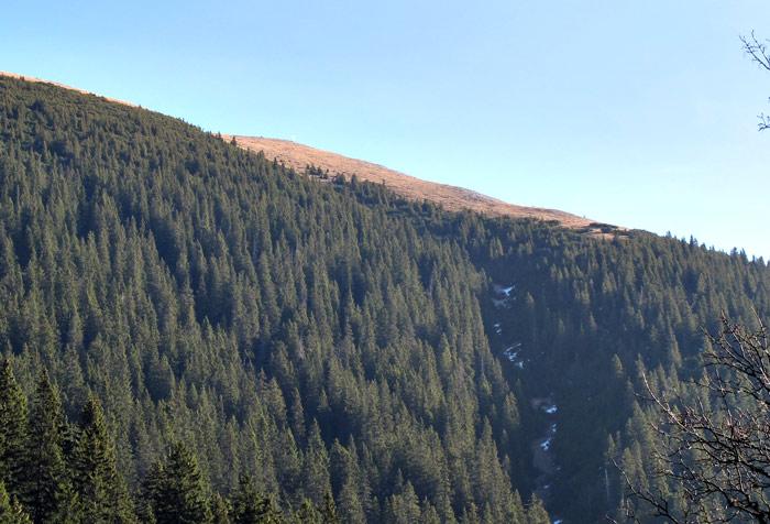 Foto: vince 51 / Wandertour / Von Grän auf das Brentenjoch / Erste Blick auf den Gipfel / 14.04.2014 21:45:19
