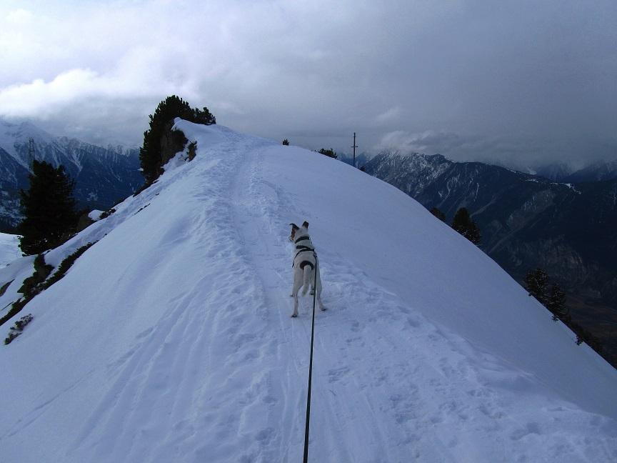 Foto: Andreas Koller / Schneeschuhtour / Panoramaloge Faltegartenkögele (2184m) / Gipfelgrat / 03.05.2014 01:03:24