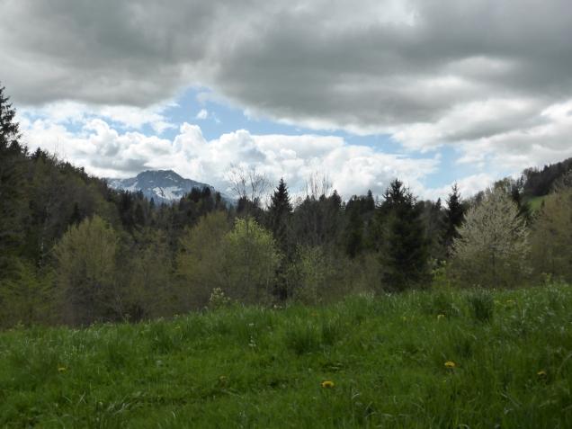 Foto: Manfred Karl / Wandertour / Durch die Glasenbachklamm auf den Rauchenbühel / 19.05.2014 19:51:26