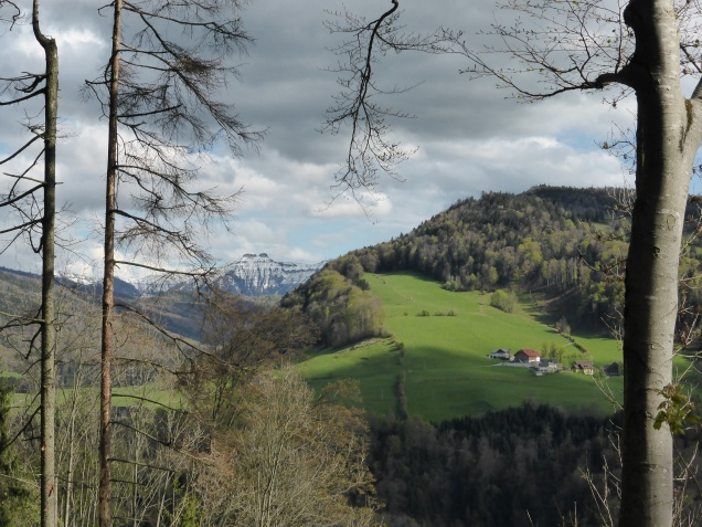 Foto: Manfred Karl / Wandertour / Durch die Glasenbachklamm auf den Rauchenbühel / Links hinten der Schmittenstein / 19.05.2014 19:46:51