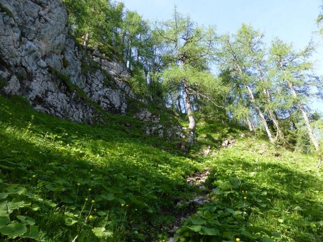 Foto: Manfred Karl / Wandertour / Über die Rotspielscheibe auf den Fagstein / Steiler, teils erdiger Anstieg / 27.07.2014 21:16:17