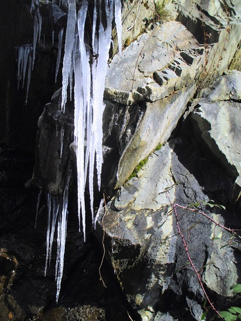 Foto: Andreas Koller / Klettersteigtour / Klettersteig Hoachwool Naturnser Sonnenberg (1200m) / Eiszapfen an der alten Straße / 12.04.2015 18:06:27
