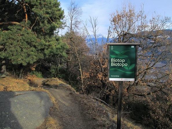 Foto: Andreas Koller / Klettersteigtour / Klettersteig Hoachwool Naturnser Sonnenberg (1200m) / 12.04.2015 17:24:57