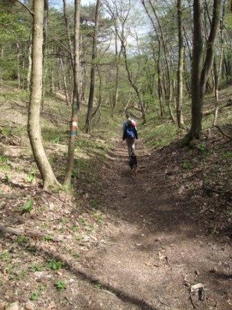 Foto: Wolfgang Dröthandl / Wandertour / Pfaffstättner Kogel - Runde von Gumpoldskirchen / Abstieg durch den Irblinggraben / 20.04.2015 14:33:51