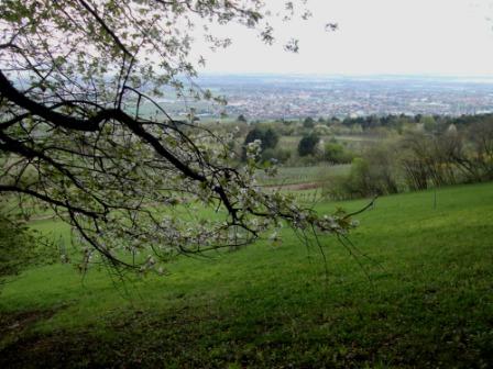 Foto: Wolfgang Dröthandl / Wandertour / Pfaffstättner Kogel - Runde von Gumpoldskirchen / Blick auf Pfaffstätten und Tribuswinkel / 20.04.2015 14:33:34
