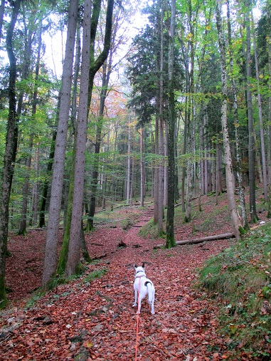 Foto: Andreas Koller / Wandertour / Runde über den Dötzenkopf (1001m) / 28.09.2015 18:40:08