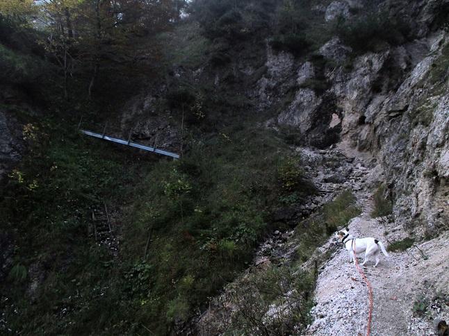 Foto: Andreas Koller / Wandertour / Runde über den Dötzenkopf (1001m) / 28.09.2015 18:39:14