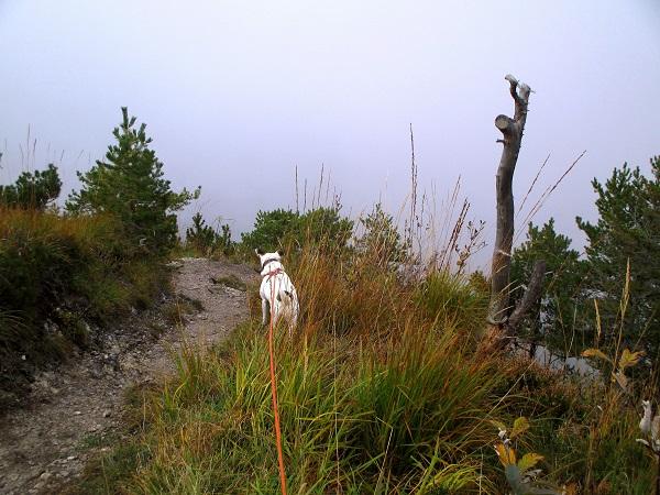 Foto: Andreas Koller / Wandertour / Runde über den Dötzenkopf (1001m) / Abstieg vom Dötzenkopf / 28.09.2015 18:36:22