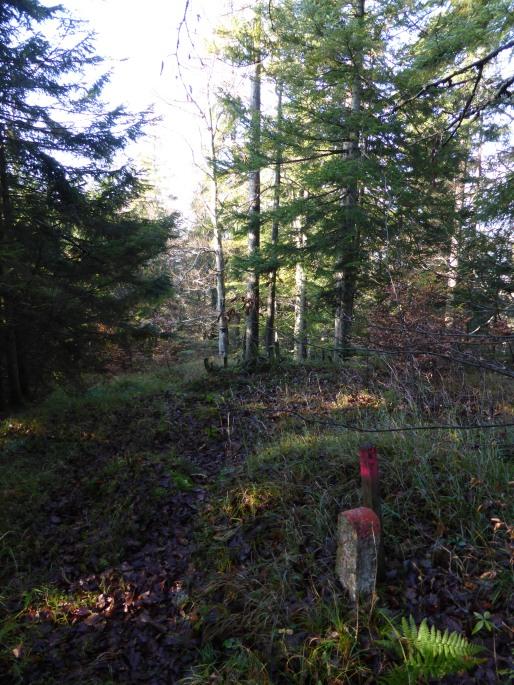 Foto: Manfred Karl / Wandertour / Kugelberg Rundweg / 01.11.2015 19:35:06