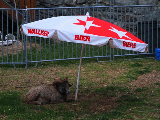 Foto: Andreas Koller / Klettersteigtour / Klettersteig Almagellerhorn (3327m) / 17.11.2015 01:33:58