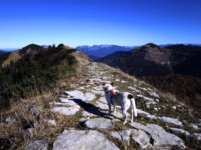 Foto: Andreas Koller / Wandertour / Kammwanderung aufs Gruberhorn (1732m) / Am Hohen First / 08.01.2016 01:31:54