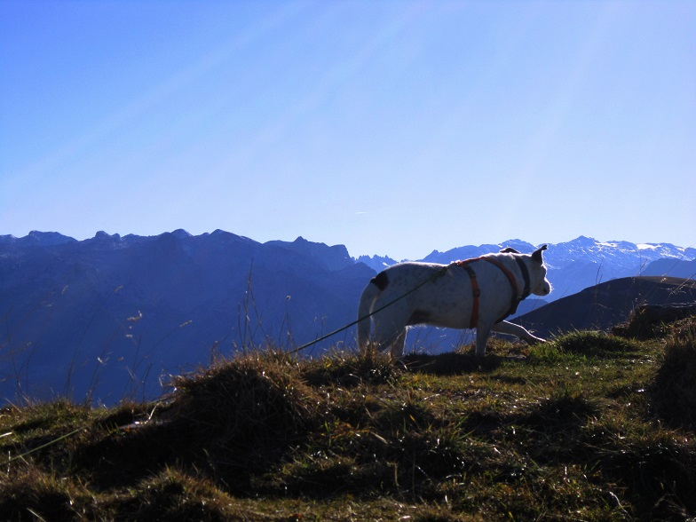 Foto: Andreas Koller / Wandertour / Kammwanderung aufs Gruberhorn (1732m) / 08.01.2016 01:23:22