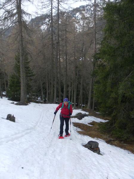 Foto: Wolfgang Lauschensky / Schneeschuhtour / Vennspitze und Padauner Berg / einfacher Waldanstieg / 07.04.2016 14:46:36