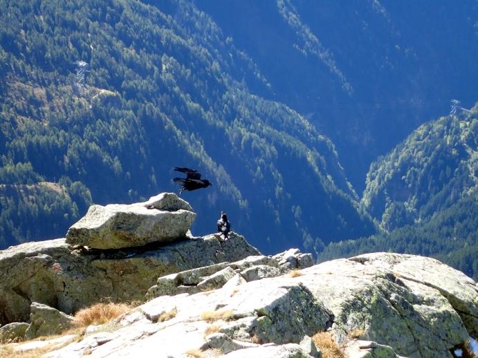 Klettersteig Ifinger : Heini holzer klettersteig meran