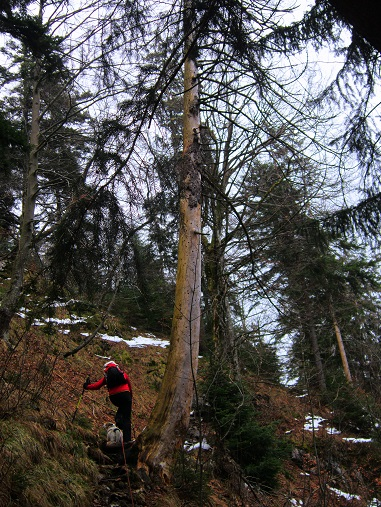 Foto: Andreas Koller / Wander Tour / Im Winter aufs Kienbergl (1071m) / 10.01.2017 01:46:37