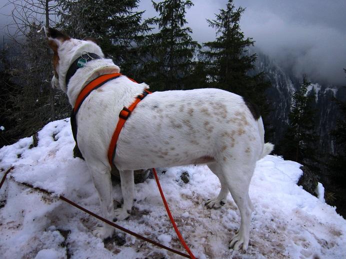 Foto: Andreas Koller / Wander Tour / Im Winter aufs Kienbergl (1071m) / 10.01.2017 01:42:12